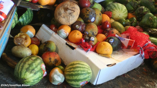 Food waste & loss – the blind spot in the fight against hunger