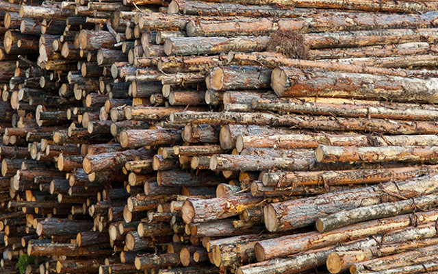 Chemicals From Wood (Waste)